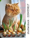 funny cat with green onions and ...