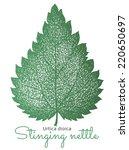 hand drawn nettle leaf.... | Shutterstock .eps vector #220650697