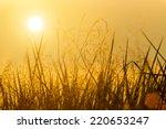 wild grass in the nature.   Shutterstock . vector #220653247