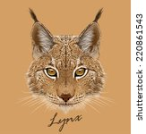 Vector Portrait Of Lynx Cat.
