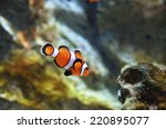 reef fish   clown fish or... | Shutterstock . vector #220895077
