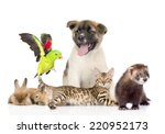 Large Group Of Pets. Isolated...
