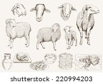 sheep breeding. set of vector... | Shutterstock .eps vector #220994203