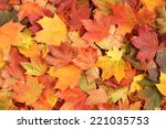 Autumn Background   Maple Leaves