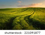 Wheat Field Landscape With Pat...