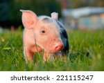 Young Cute Pink Piggy In Green...
