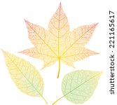 Three Autumn Leaves Isolated O...