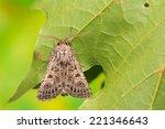 tholera decimalis | Shutterstock . vector #221346643