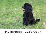 black poodle dog sitting at...   Shutterstock . vector #221377177