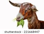 Drawing Goats  Portrait  Goat...