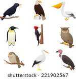 Realistic Bird Collection  Wit...
