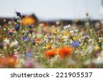 Colorful Bright Meadow Flowers...