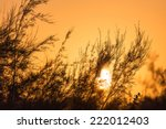 branches of a tree at sunset | Shutterstock . vector #222012403