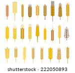 Large Collection Flat Ears Of...