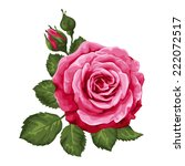 Stock vector beautiful rose isolated on white perfect for background greeting cards and invitations of the 222072517