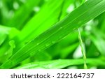 water drops on the green grass | Shutterstock . vector #222164737