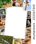 frame with collection of wild... | Shutterstock . vector #222267343