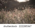 sunset on reeds | Shutterstock . vector #222285367