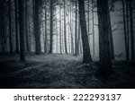 spooky night forest with fog | Shutterstock . vector #222293137