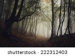 road through dark forest in...   Shutterstock . vector #222312403