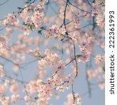 pastel retro filter pink cherry ... | Shutterstock . vector #222361993