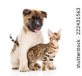 Stock photo japanese akita inu puppy dog hugs little bengal cat isolated on white background 222431563