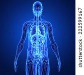human organs | Shutterstock . vector #222599167