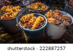 White Wine Grapes In Buckets...