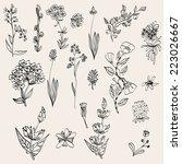 floral background. set... | Shutterstock .eps vector #223026667