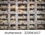 Chicken Shop In India