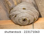 Closeup View Of Wasps And Huge...