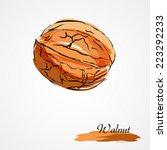 hand drawn vector brown walnut...   Shutterstock .eps vector #223292233