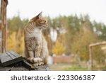 Cute Ginger Cat Walking Outdoo...