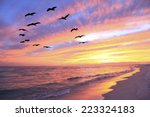 A Flock Of Brown Pelicans Fly...