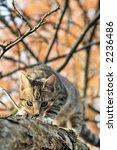 cat | Shutterstock . vector #2236486