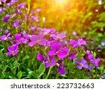 Detail Of Rock Garden Flower....