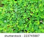 close up of light fresh green... | Shutterstock . vector #223745887