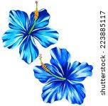 vector hibiscus illustration....   Shutterstock .eps vector #223885117