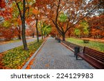 autumn alley in the park | Shutterstock . vector #224129983