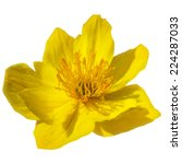 Yellow Vector Flower Isolated...