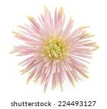 flower isolated on white...   Shutterstock . vector #224493127