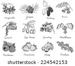 berries set | Shutterstock .eps vector #224542153