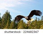 North American Bald Eagle In...