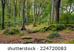 Beech Trees At Trevalor Wood...