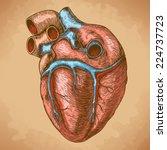 vector engraving heart in retro ... | Shutterstock .eps vector #224737723