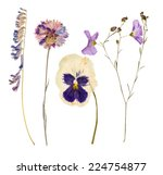 Stock photo set of wild dry pressed flowers and leaves isolated 224754877