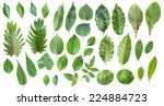 Collection Of Leaves Isolated...