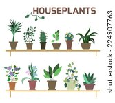 Vector Set Of Indoor Plants In...