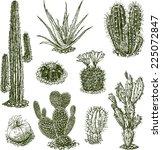 cactuses | Shutterstock .eps vector #225072847
