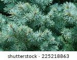 background blue spruce